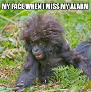 monkey face alarm