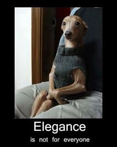 dog elegance