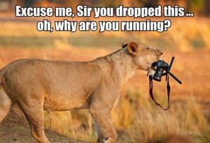 lion-camera
