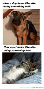 dog-cat-something bad