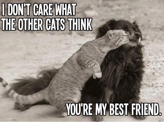cat-dog best friends