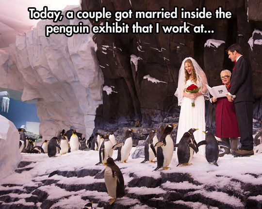 penguin-wedding