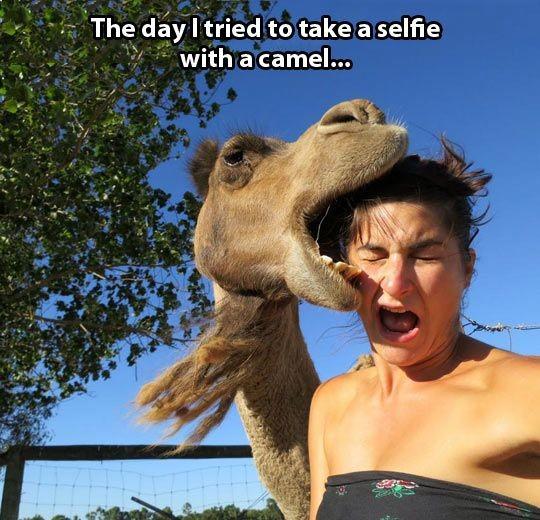 selfie-camel