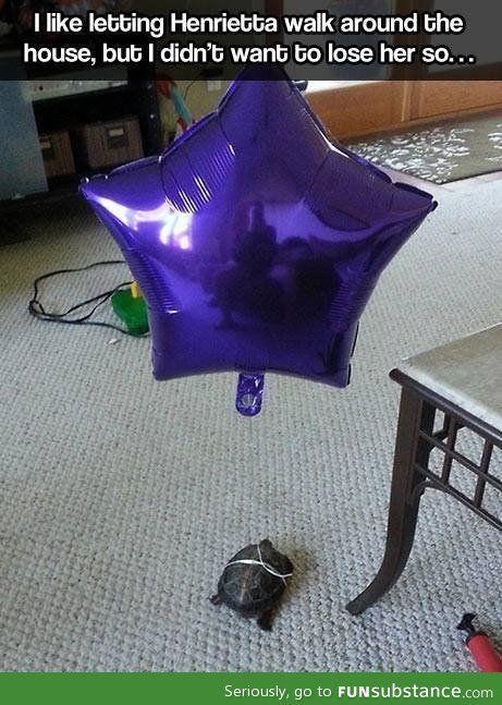 tortoise-balloon