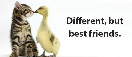 different best friends