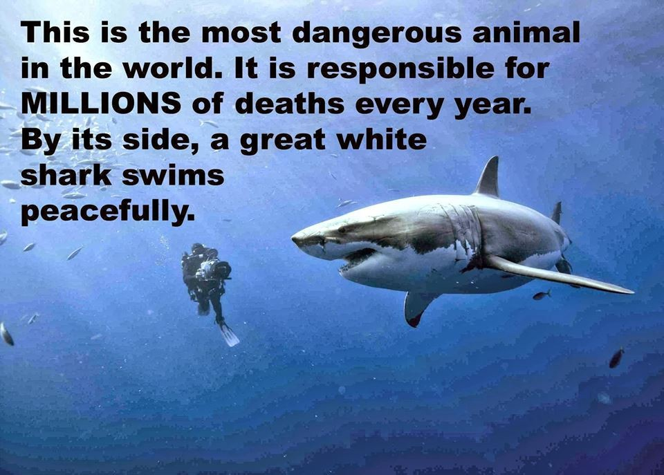shark-human killer