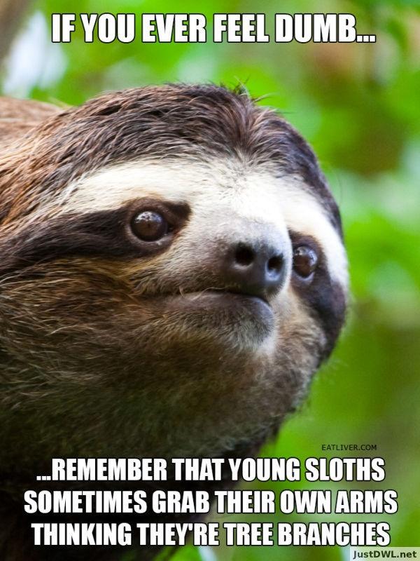 sloth-dumb