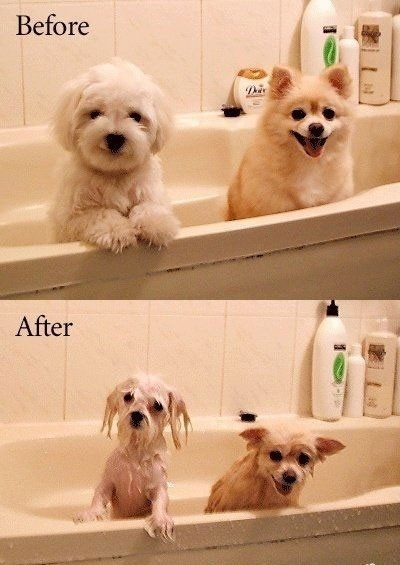 before-after dogs