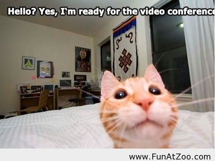 cat-video conference