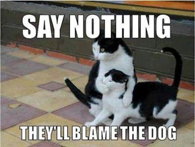 cats blame dog