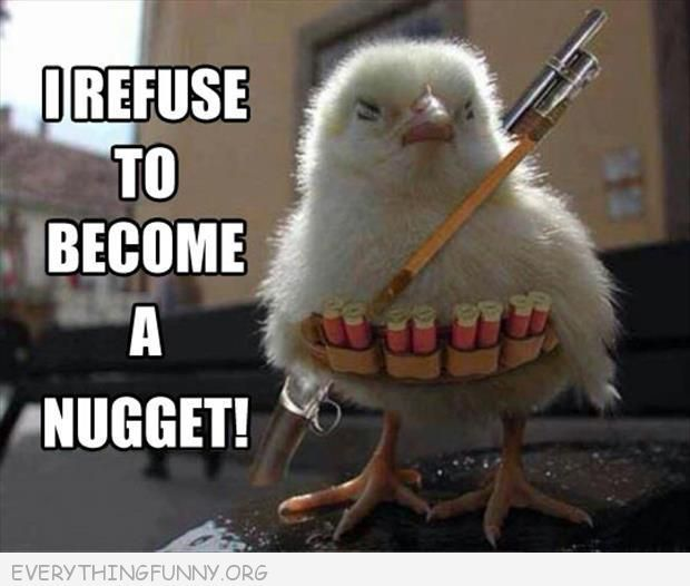 chick-refuse-nuggets