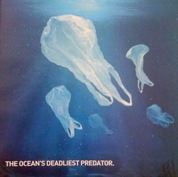 plastic bags predators