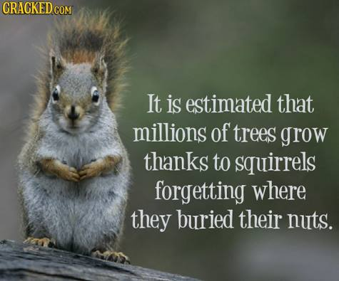 squirrel-trees