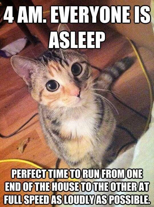 4 a.m. kitten