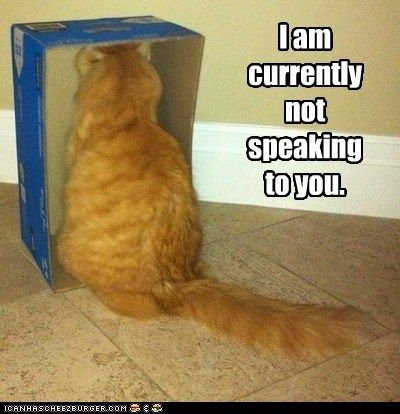 cat-not-speaking