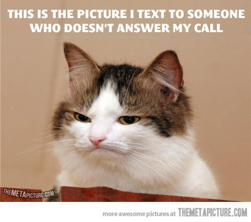 cat picture not answer call