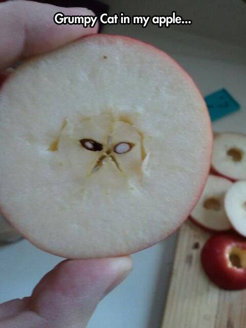 Grumpy cat apple