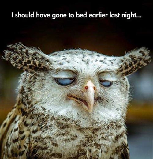 gone to bed late owl