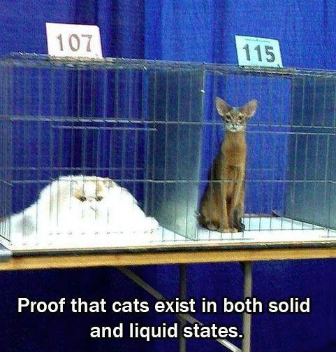 cats-solid-liquid