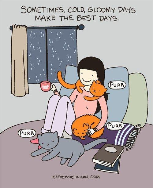gloomy days - cats