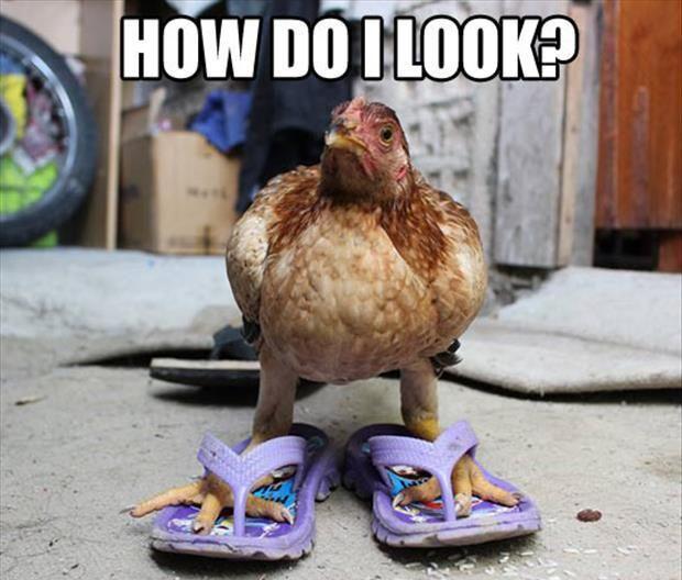 pretty chick