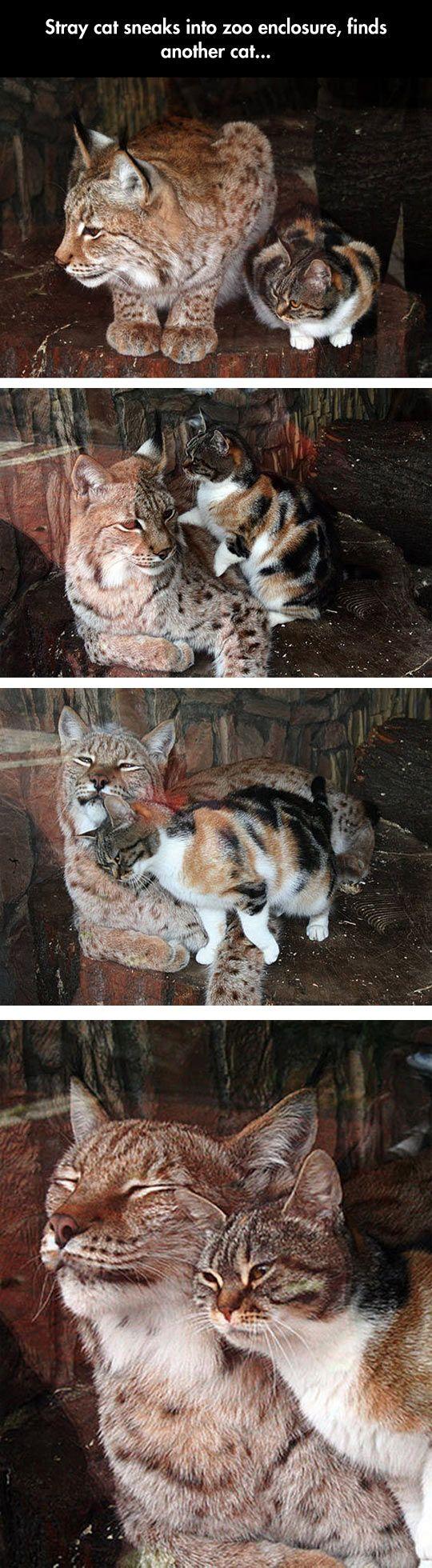 cat - feline - zoo