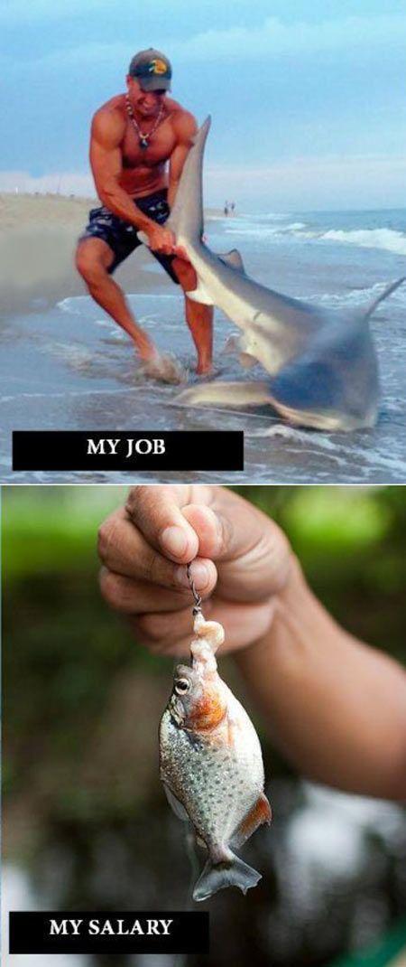 job - salary