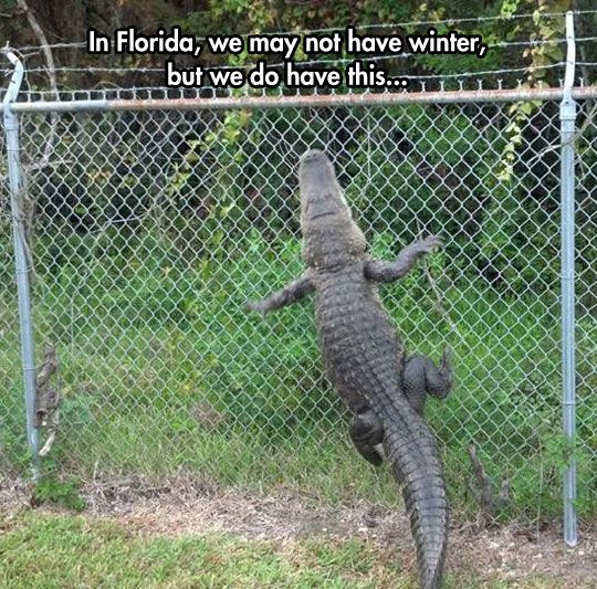 Florida alligator fence