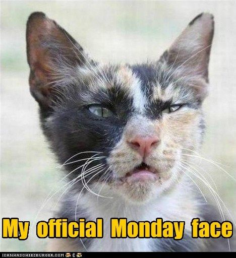 Monday face - cat