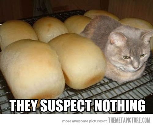 cat hiding loaves