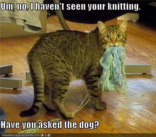 cat not see knitting