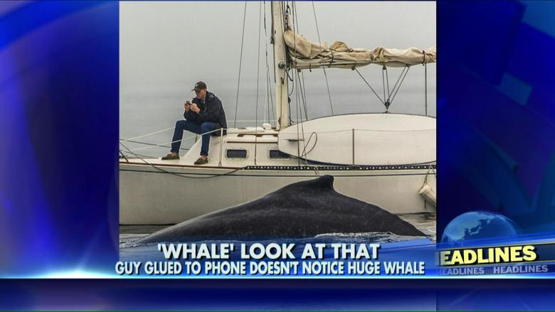 phone_whale