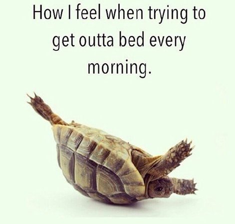 tortoise outta bed