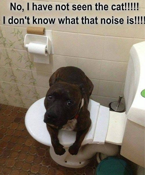 dog not seen cat toilets