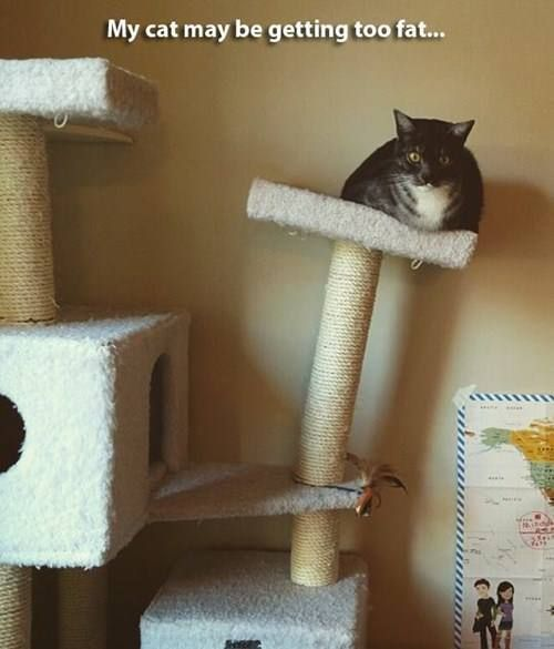 fat cat tree house