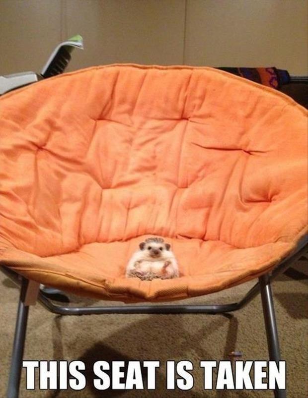 hedgehog seat taken