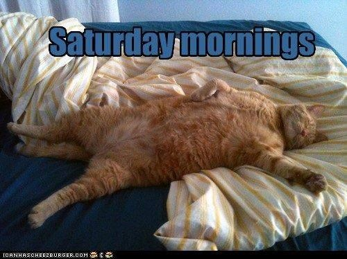 saturday mornings cat