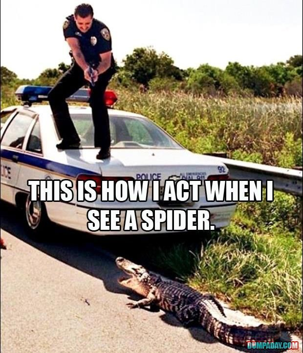 see spider - act crocodile
