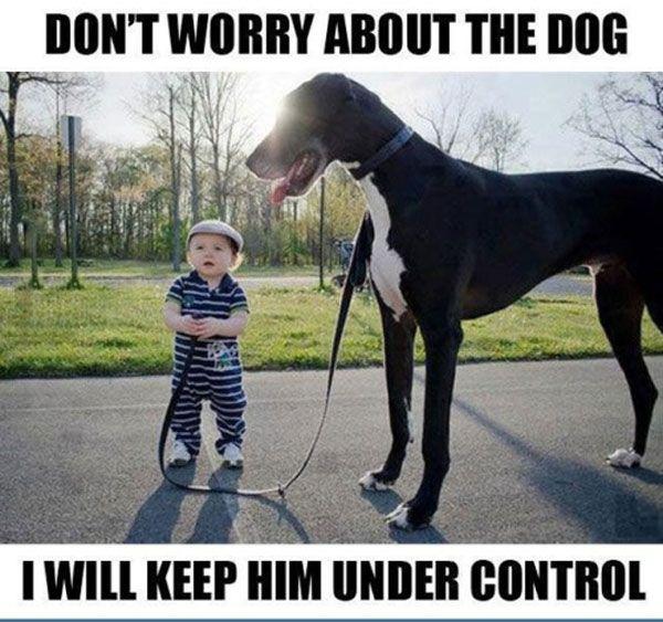 dog under control