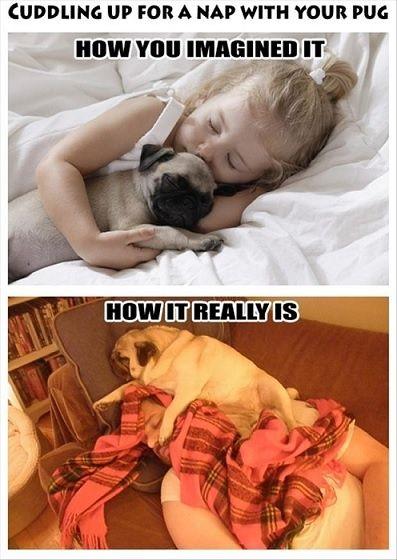nap with pug