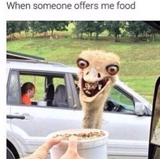 when someone offers me food