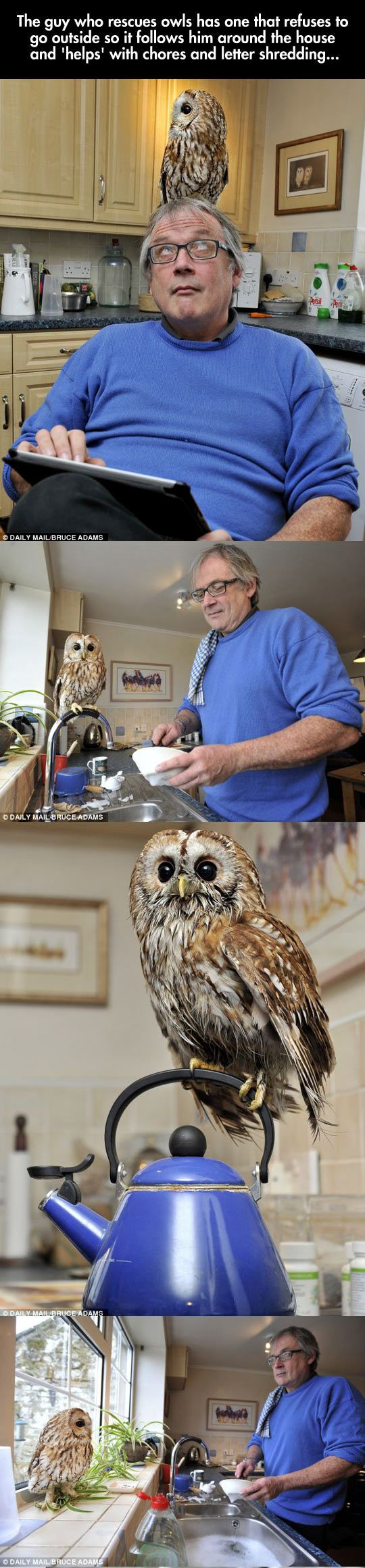 adopted owl