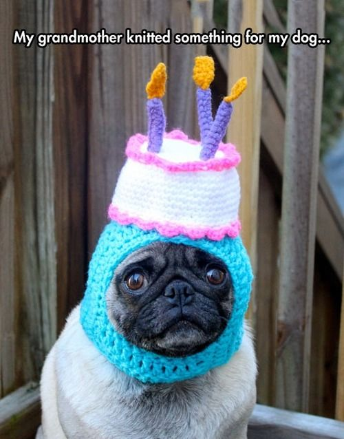 dog outfit knitted