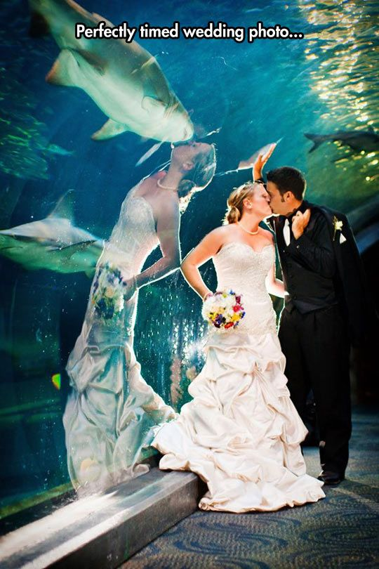 wedding photo fish