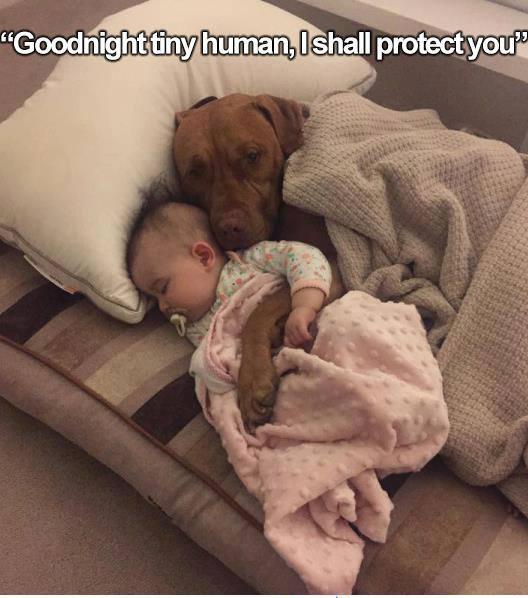 Goodnight tiny human - dog