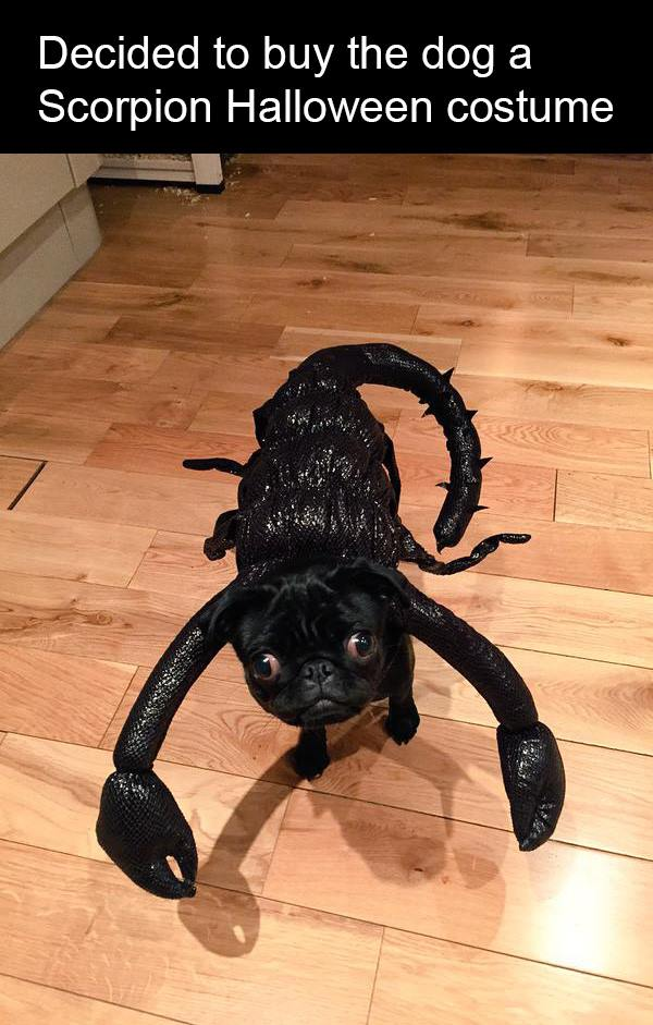 halloween scorpion dog costume
