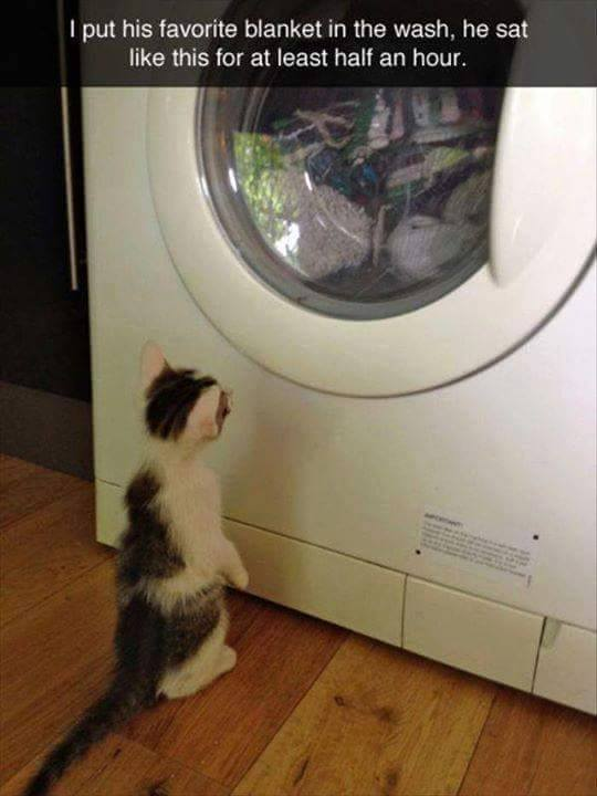 kitten washing machine