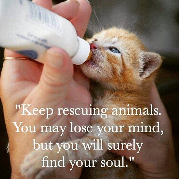 rescuing animals
