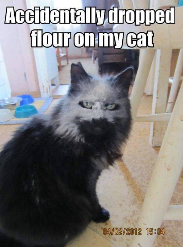 cat flour