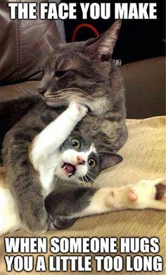 cat hugging too long
